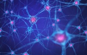3D-Synapsen-Modell | Stanford-Studie zur Wirkung von Hypnose auf das Gehirn